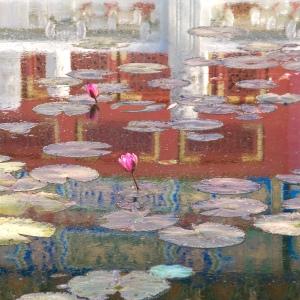 water lilies china pavilion